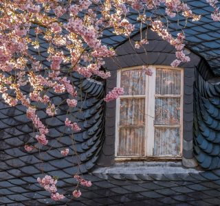 How to Prepare Your Windows for Spring Top 5 Maintenance Tips